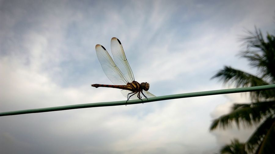 Low angle view of dragonfly against sky