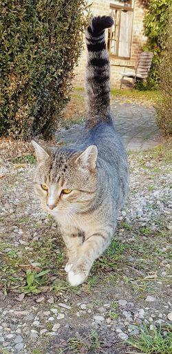 Pets Domestic Cat High Angle View Animal Themes Feline Tabby