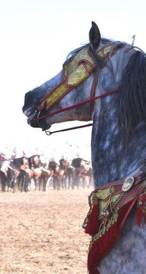 Rear view of horse on field against sky