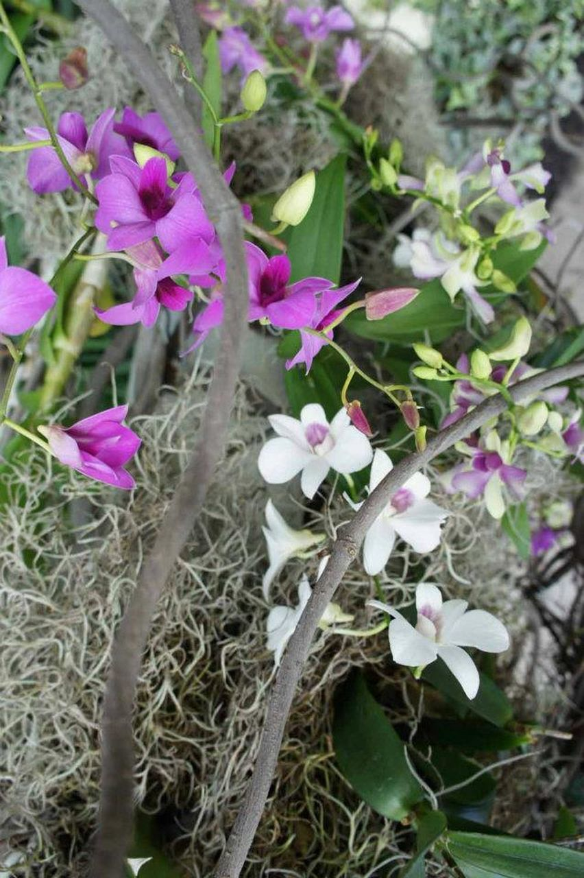 FLOWERS BLOOMING ON PLANT