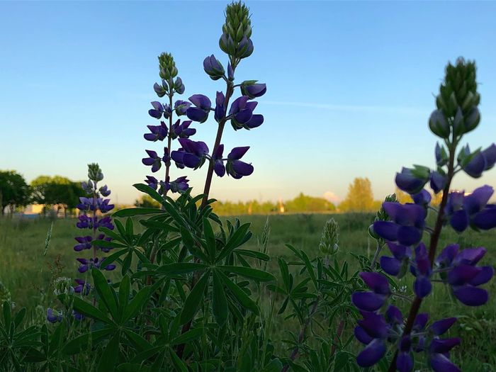 Plant Flower Growth Flowering Plant Beauty In Nature Sky Freshness