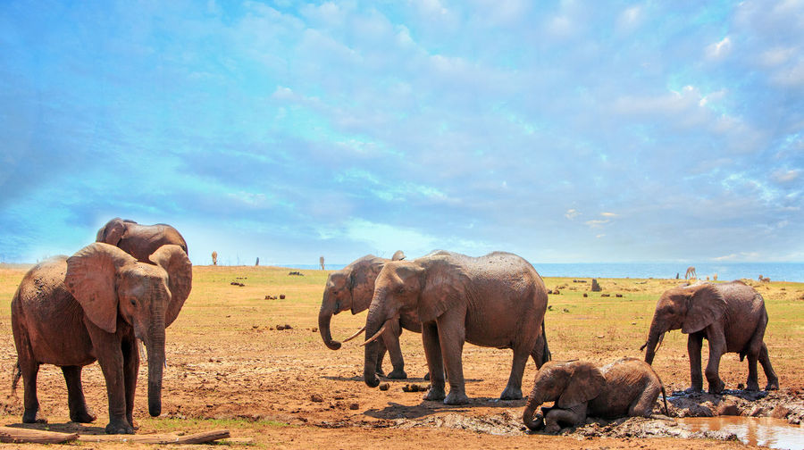 Safari Safari Animals Nature No People Outdoors Hwange National Park Animals In The Wild Natural Beauty Nature Wildlife Photography Animal Themes Mammal Animal Animal Wildlife Group Of Animals Elephant Day African Elephant Big Five Scenics - Nature Travel Destination Africa Sky Cloud - Sky Landscape