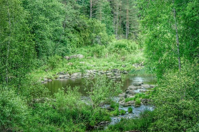 Colours Of Nature Colors Of Nature Summer Time  Finland Lieto Nautelankoski Nature Beauty Green Color Green Nature Early Summer Summer2016 River Walk Fresh On Eyeem  Fresh Nature