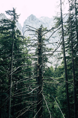 Balkan Roadtrip Beauty In Nature Coniferous Tree Day Environment Evergreen Tree Forest Green Color Growth Land Mountain Nature No People Non-urban Scene Outdoors Pine Tree Pine Woodland Plant Scenics - Nature Tranquil Scene Tranquility Tree Tree Trunk Trunk WoodLand