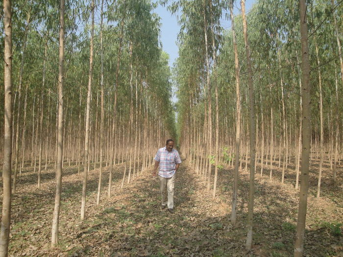 Full length of man walking amidst trees on field