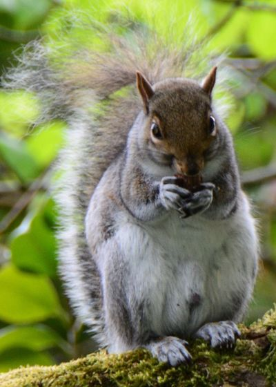 Squirrel eating nut while standing on field