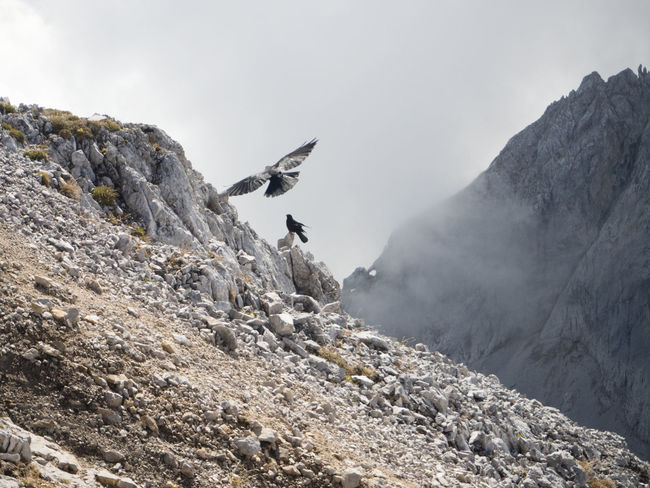 jackdaws flying in high mountains Jackdaws Mountain Jackdaws Alps Beauty In Nature Birds Freedom High Mountains Hiking Mountain Mountain Range Nature Outdoors Rock Rock - Object Tranquil Scene