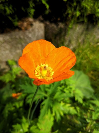 182/365 Blumen