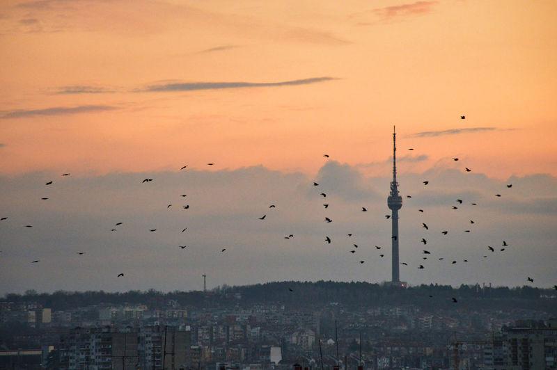 Birds flying in city against sky during sunset