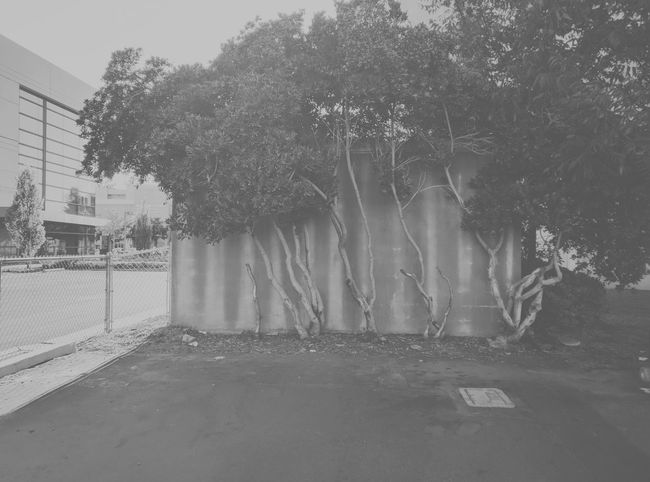Trees Trees In Background Small Trees Fence Small Building Black And White Black And White Photography Black & White Greyscale No People Around The City  Concrete Wall Asphalt Rows Of Windows Vscocam VSCO