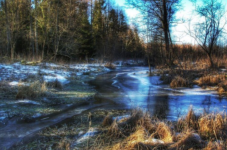 #NotYourCliche #forest #daylight #landscape #nature #photography Swamp