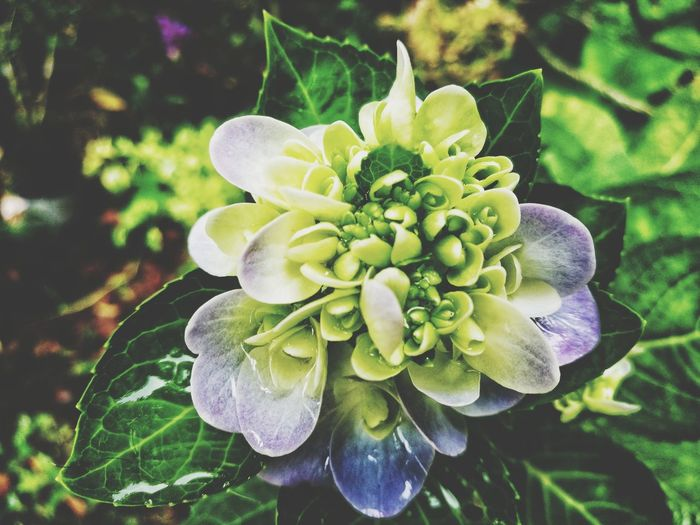 Flower Growth Plant Nature Beauty In Nature Petal Fragility Green Color Flower Head No People Close-up Focus On Foreground Outdoors Day Freshness Blooming Passion Flower Taman Seribu Bunga. Melaka , Malaysia EyeEm Ready   Shades Of Winter