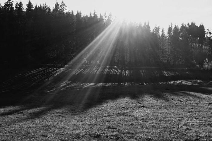 ...stairway to heaven? Meadow Forest Blackandwhite EyeEm Nature Lover EyeEm Best Shots Sunbeams Sunbeam Stripes Sunlight Sun Clouds And Sky Stairway To Heaven Heaven Shadows & Lights EyeEm Nature Lover Blackandwhite