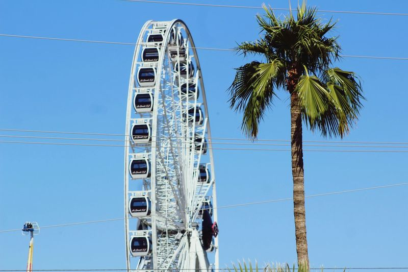 Fairgrounds Festival Carnival Palm Tree Tropical Climate Sky Tree Nature Low Angle View Built Structure Plant Blue Building Exterior Day Architecture Cable Outdoors Clear Sky