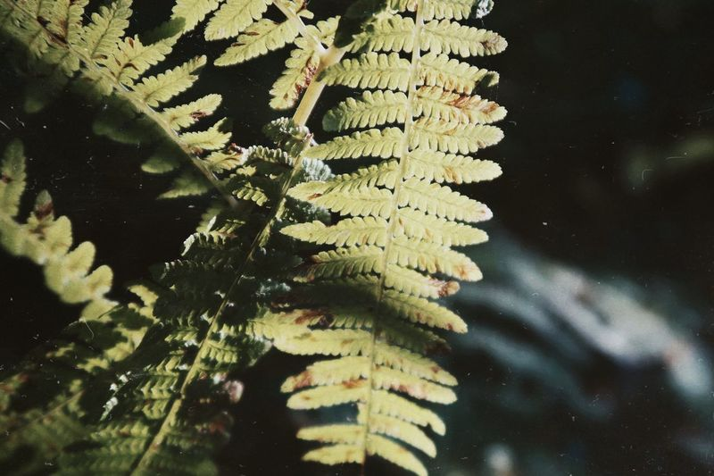 Close-up of fern by tree
