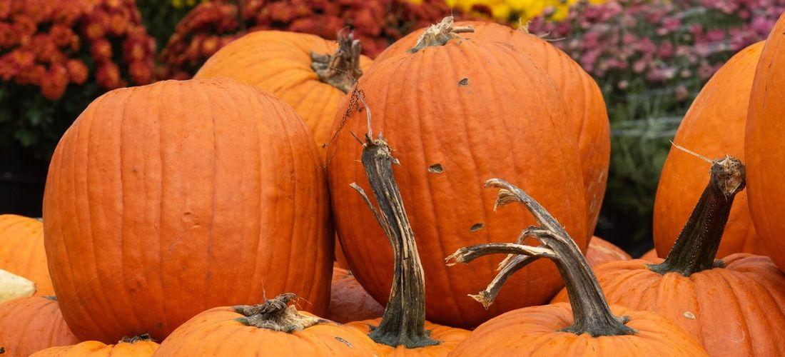 Close-up of pumpkins during autumn