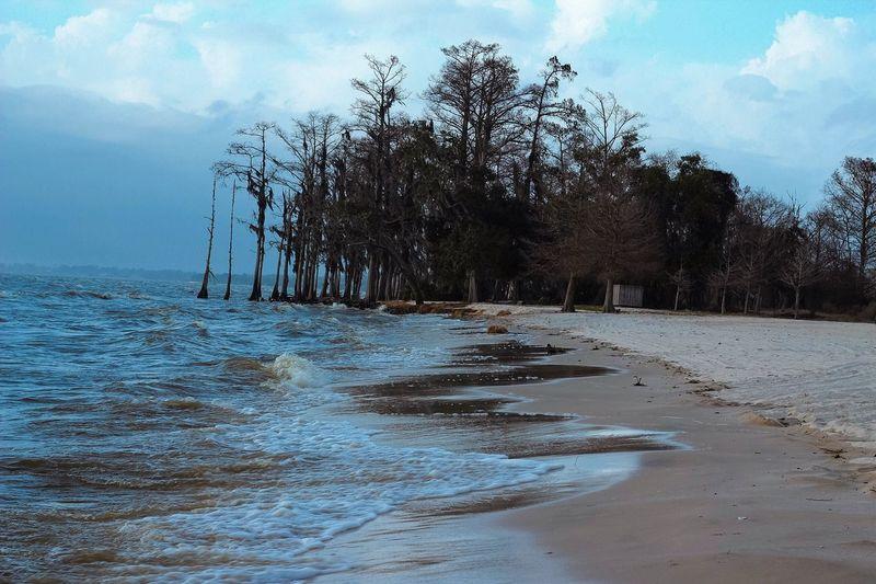 ChronoCapturePhotography Roaring Tidal Waves Washing Up Deepblue Trees New Orleans, LA