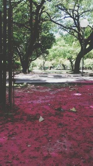 Parquedajaqueira Natureza Vibe Positiva