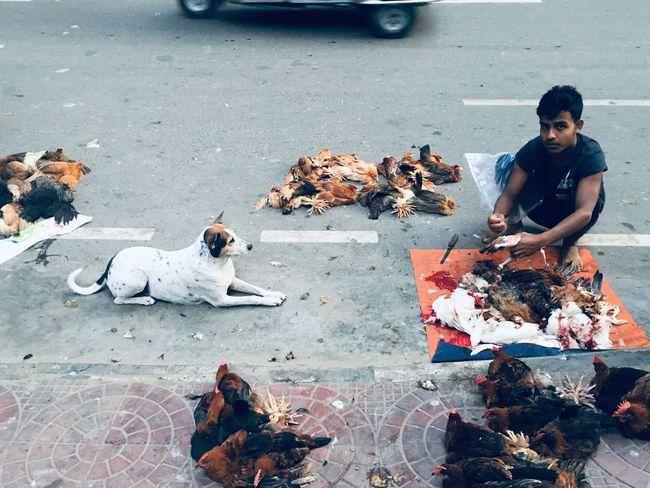 Hope Street Real People Vertebrate Men Day Road Pets Outdoors