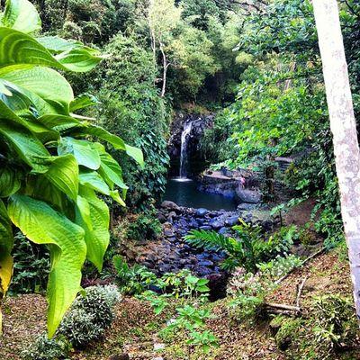 Waterfall All_shots Ourbestshots Outdoors Best_nature_photo_ever Bestofmycity_2see Rainforest Islandoutdoors Islandlivity Islandlife Grenada
