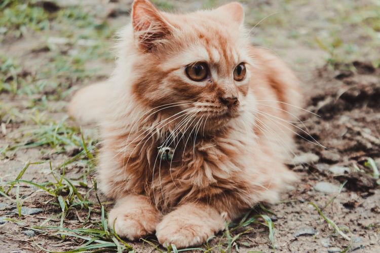 Cat looking away on a field
