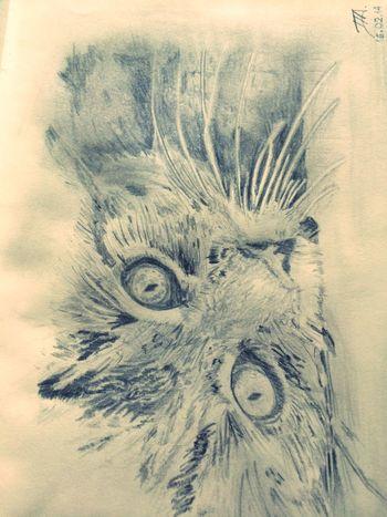 Cat Sketch Draw Drawing Sketch Sketchbook Sketching Feline Art Art, Drawing, Creativity ArtWork