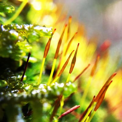 Nature Beauty In Nature Macro Freshness Moss Growth Sunlight Microscape