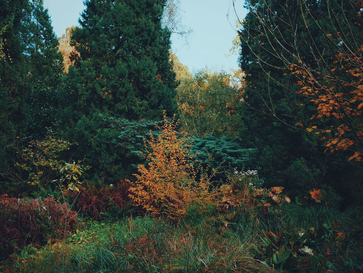 Tree Growth Plant Tranquility Tranquil Scene Nature Green Color Day Non-urban Scene Scenics Sky Outdoors Green Beauty In Nature No People Remote Arboretum Bokrijk Belgium Autumn Beauty In Nature Autumn Colors Nature Freshness The Great Outdoors - 2017 EyeEm Awards