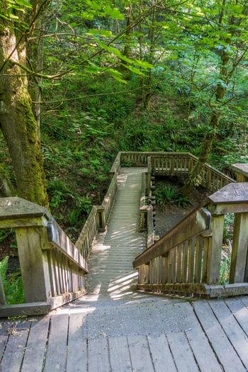 Walkway over stream in Dash Point, Washington. Pacific Northwest  Washington State Architecture Bridge Dash Point Day Nature No People Outdoor Outdoors Tree Walkway Wooden