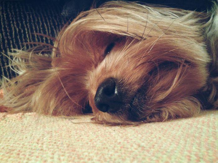 Adogslife Sleepingdog