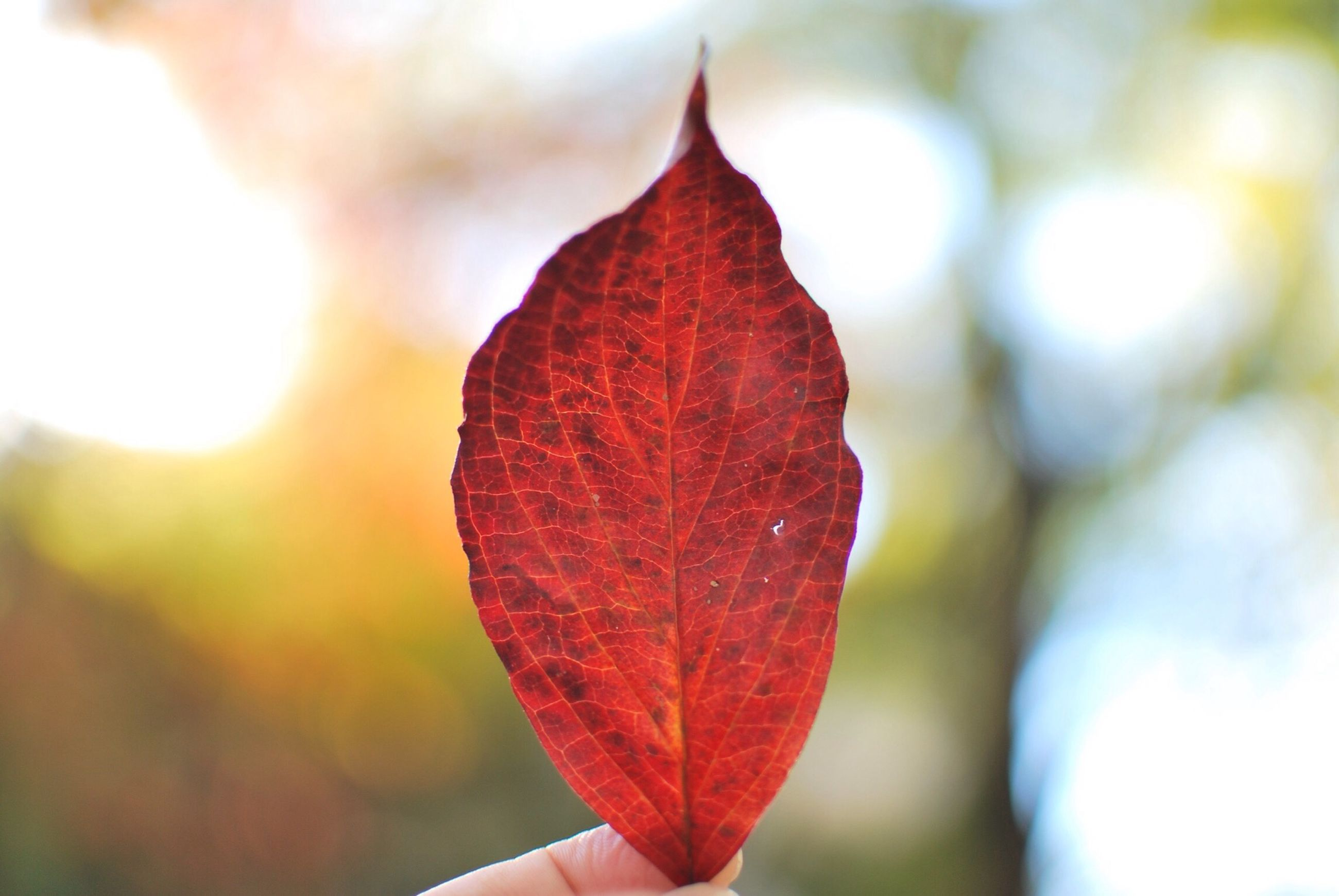 focus on foreground, leaf, close-up, leaf vein, autumn, season, change, nature, orange color, tree, natural pattern, maple leaf, sunlight, part of, leaves, branch, beauty in nature, selective focus, dry, growth