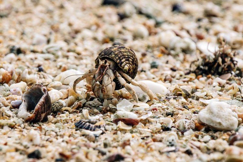 Close-up of crab on pebbles at beach