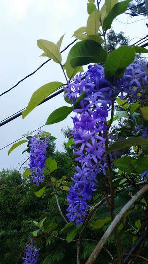 This morning... Taking Photos Naturelovers Flowers