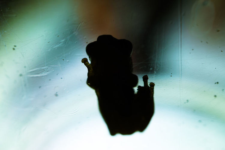 Frog Animal Themes Close-up Light And Shadow No People One Animal Silhouette Small Frog