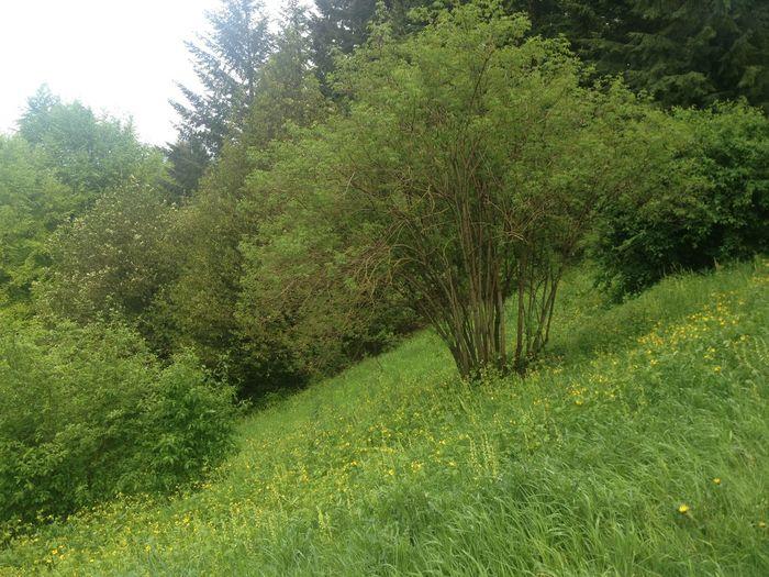 Nature Oregon The Environmentalist – 2014 EyeEm Awards