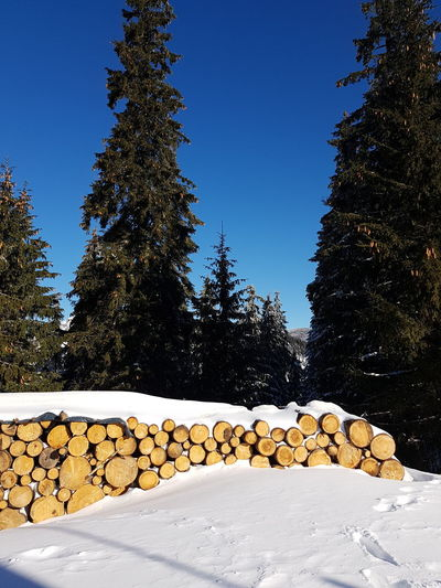 Blue Clear Sky Cold Temperature Day Firewood Forest Large Group Of Objects Log Lumber Industry Nature No People Plant Sky Snow Stack Timber Tree Winter Wood Wood - Material Woodpile