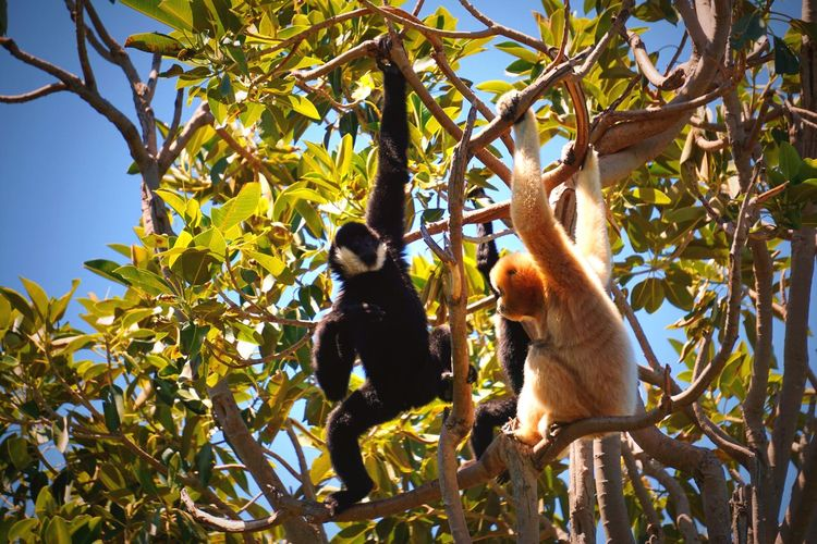 Brothers For Life Family Monkeys Animal Planet Plant Tree Nature Growth Leisure Activity Low Angle View Real People Beauty In Nature