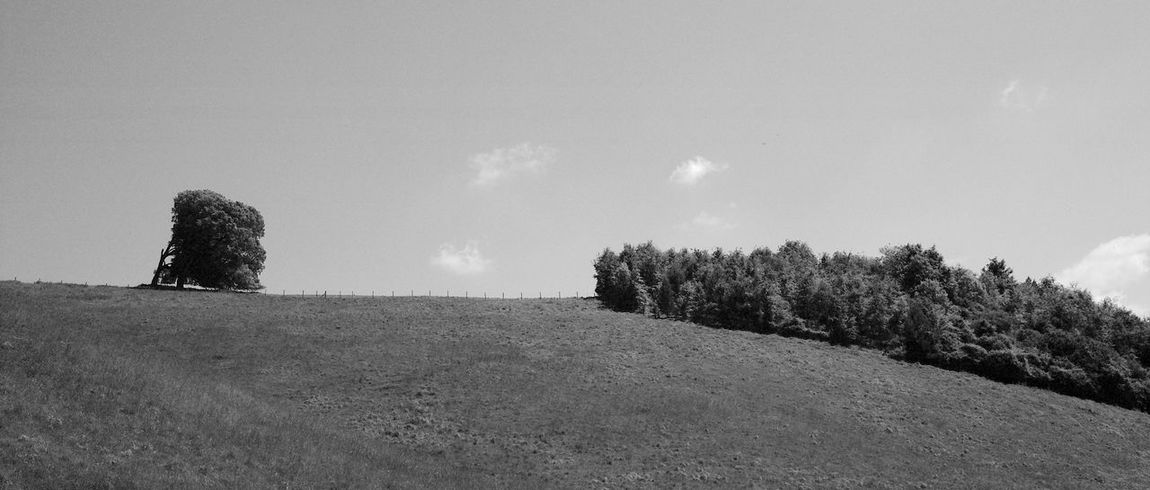 Sometimes Windy Tranquility Sky Plant Tree Land No People Nature Scenics - Nature Landscape Tranquil Scene Day Beauty In Nature Field Outdoors Cloud - Sky Hill Panoramic Growth Blackandwhite Black And White
