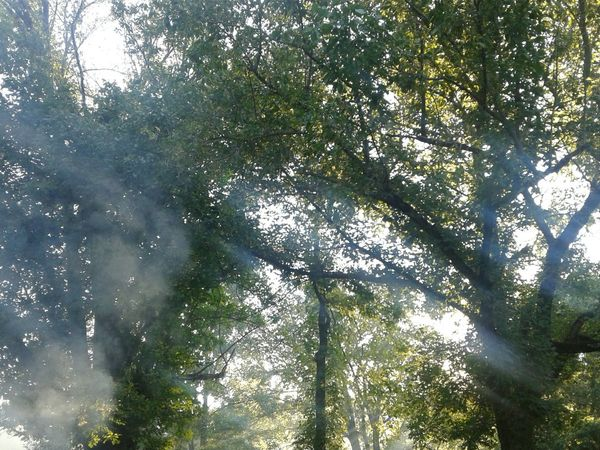 Countryside Sky Non-urban Scene WoodLand Majestic Outdoors Smoke♥ Smokey Sunset Sun Flare Tree Trunk