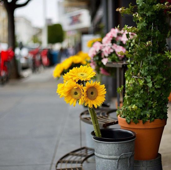 Happy Spring! Flower Plant Fragility Potted Plant Freshness Yellow Vase Growth Nature Botany Petal Outdoors Focus On Foreground Flower Head No People Building Exterior Beauty In Nature Day Springtime Bouquet Stories From The City EyeEmNewHere