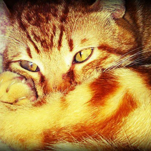 Lufi is asasing Cat #cute #love