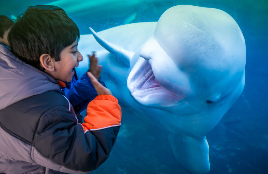 say Hi to Mr. Beluga Animal Themes Aquarium Beluga Beluga Whale Boys Childhood Elementary Age Fun FUNNY ANIMALS Funny Faces Funny Moments One Boy Only One Person Swimming Water