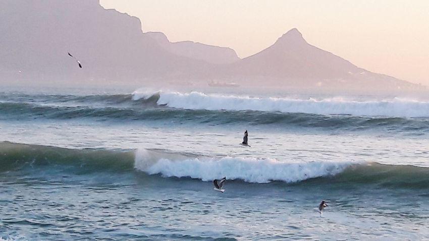 Silhouette Nature Water Bird Wave Sea Day Seagulls Feeding South Africa Blaauwberg Beach Table Mountain Mountain Range Scenics
