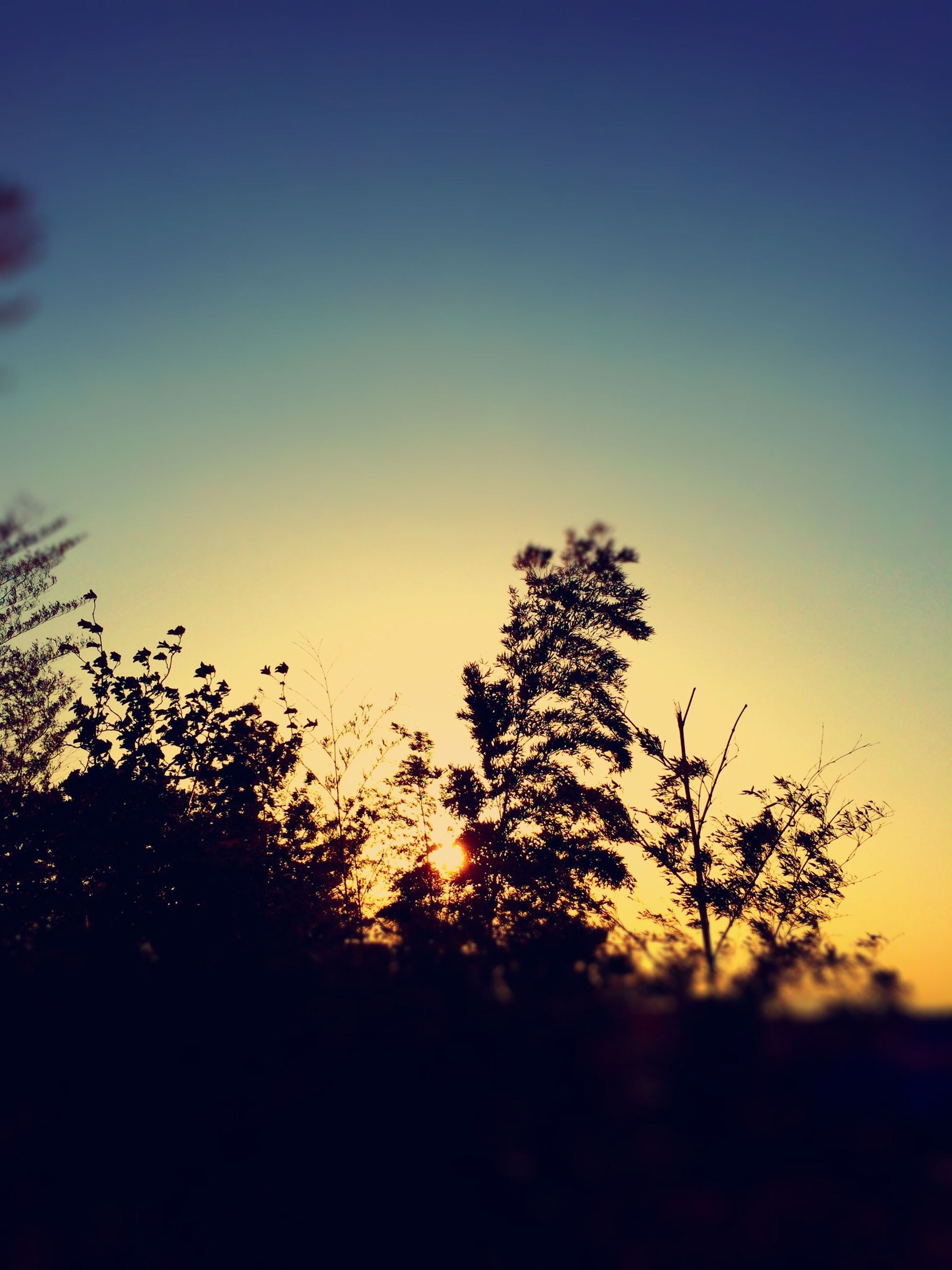 sunset, silhouette, clear sky, copy space, growth, beauty in nature, tranquility, nature, tree, tranquil scene, scenics, plant, field, sky, orange color, dusk, landscape, no people, outdoors, idyllic
