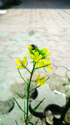 Yellow love. Yellow Flower Yellow Nature Bee Love Close Up Beauty