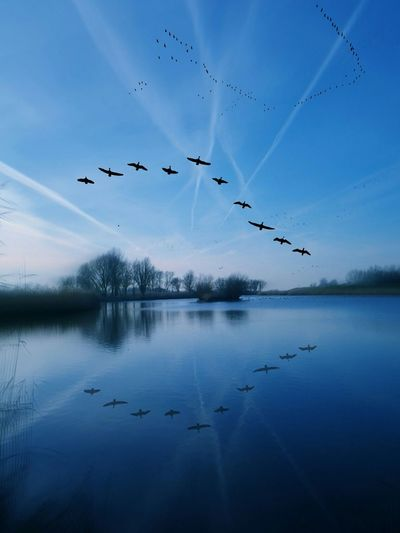 Reflection of silhouette birds in lake against blue sky at dusk