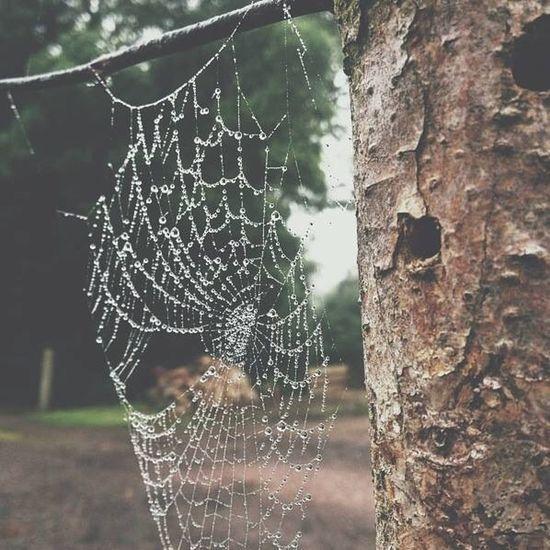 Spidersweb Outsidee Wood Water Nikon