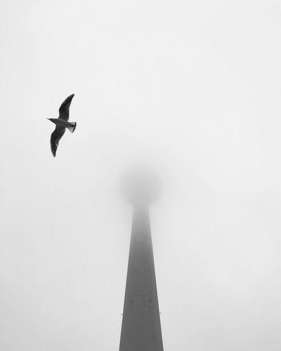 Giant Keyhole in the Sky Berlin Fog Tvtower Fernsehturm Bird Architecture Negative Space Greyscale Monochrome Blackandwhite