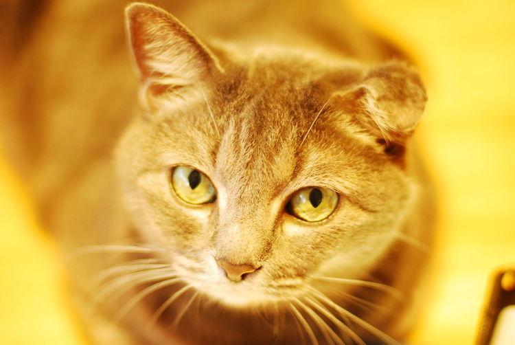 Cat Lovers Indoors  ももちゃん cat