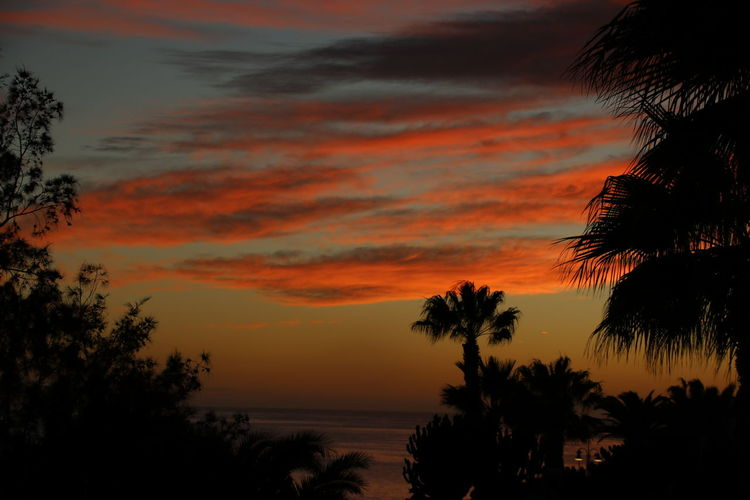 Sunset Sky Beauty In Nature Scenics - Nature Tranquility Tranquil Scene Orange Color Tree Plant Silhouette Cloud - Sky Water Idyllic Nature No People Sea Non-urban Scene Growth Outdoors Horizon Over Water Romantic Sky Palm Tree Tropical